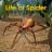 喂蜘蛛日常 v1.1 安卓版
